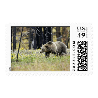 Grizzly Bear in Field at Yellowstone National Park Stamps