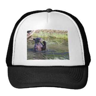 Grizzly Bear in the Water Hats