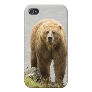 Grizzly Bear in Water at the Kodiak Refuge Case For iPhone 4