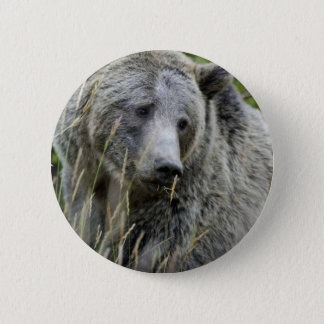 Grizzly Bear in Yellowstone National Park Button
