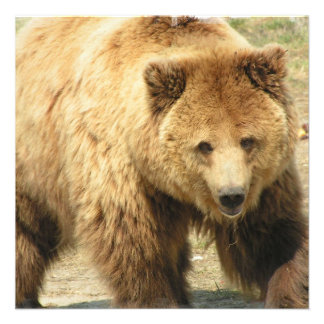Grizzly Bear Invitation