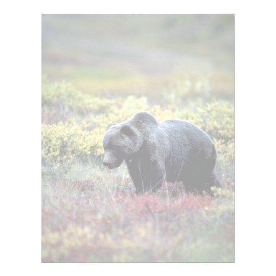 Grizzly Bear Letterhead