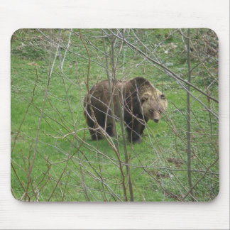 Grizzly Bear.Mouse Pad