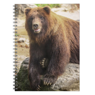 Grizzly Bear Journals