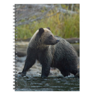 Grizzly Bear on the Babine River BC Spiral Notebook