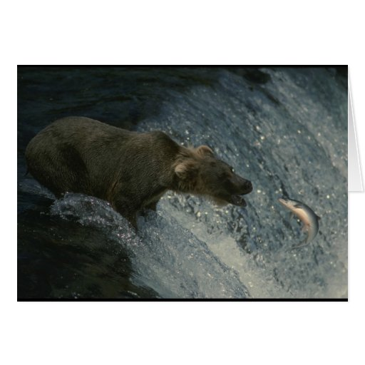 Grizzly Bear  Picture-Fishing for Salmon Greeting Card