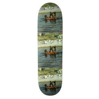 Grizzly Bear Playing Custom Skateboard