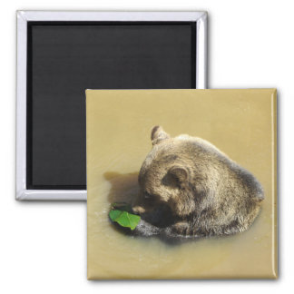 Grizzly Bear Playing with a Leaf Magnet