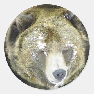 Grizzly Bear Portrait In Snow Classic Round Sticker