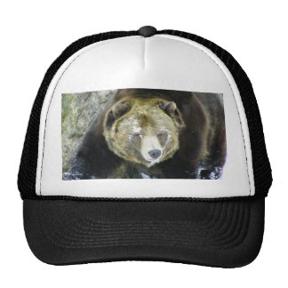 Grizzly Bear Portrait In Snow Trucker Hat