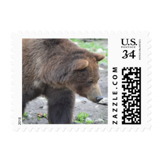Grizzly Bear Postage Stamps