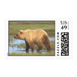 Grizzly Bear Postage