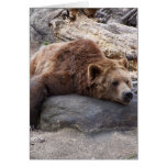 Grizzly Bear Resting On Rock Card
