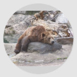 Grizzly Bear Resting On Rock Classic Round Sticker