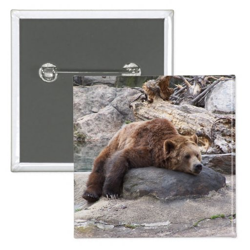 Grizzly Bear Resting On Rock Pinback Buttons
