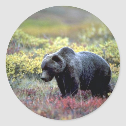 Grizzly Bear Round Stickers
