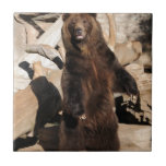 Grizzly Bear Sow Ceramic Tile