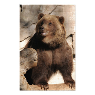 Grizzly Bear Sow Stationery