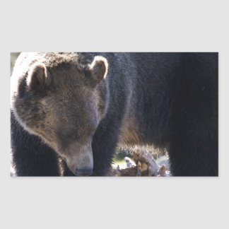 Grizzly Bear Rectangle Sticker