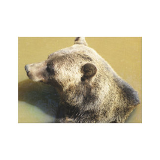 Grizzly Bear Stretched Canvas Print