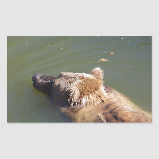 Grizzly Bear Swimming Rectangular Sticker