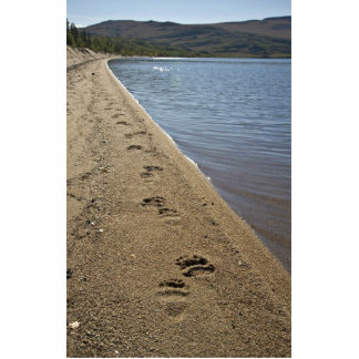Grizzly bear tracks, Sithylemenkat Lake Acrylic Cut Outs