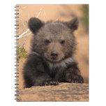 Grizzly bear (Ursus arctos horribilis) Spiral Note Book