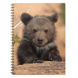 Grizzly bear (Ursus arctos horribilis) Spiral Note Book