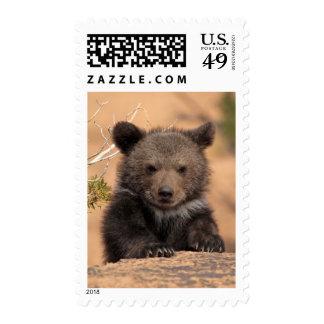 Grizzly bear (Ursus arctos horribilis) Postage