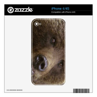 Grizzly Bear Wildlife Animal-lover Decals For The iPhone 4S