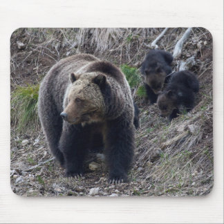 Grizzly Bear with Cubs Mousepad