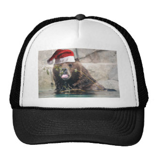 Grizzly Bear with Santa Hat