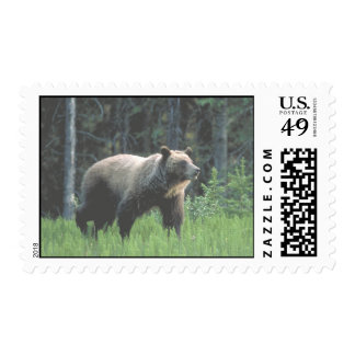Grizzly Bear Woods Postage