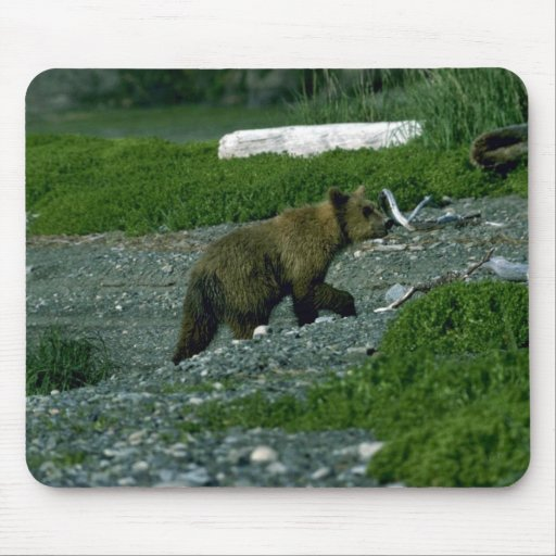 Grizzly Bear-yearling cub Mouse Pad