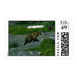 Grizzly Bear-yearling cub Postage Stamps