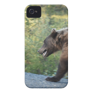 Grizzly bear Yukon, Canada mugs, totes, t-shirts iPhone 4 Cover