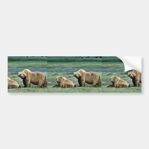 Grizzly Bears Bumper Stickers