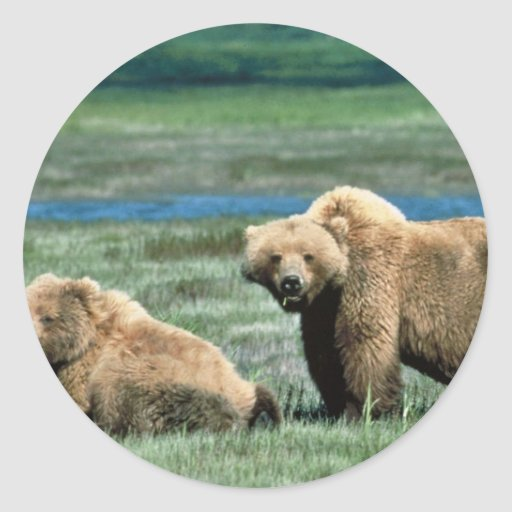 Grizzly Bears Classic Round Sticker