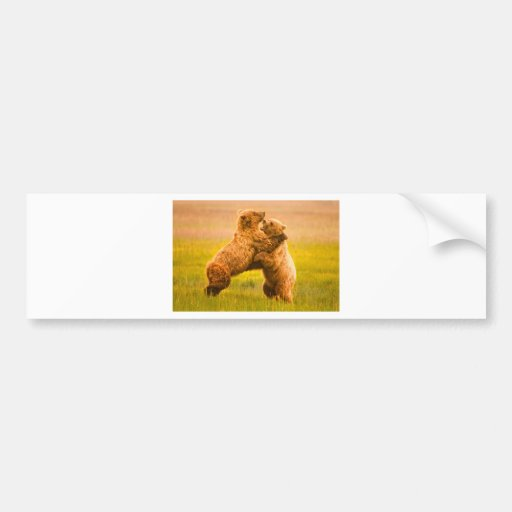 Grizzly Bears Wrestling Bumper Sticker