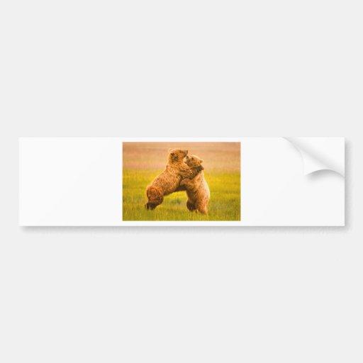 Grizzly Bears Wrestling Car Bumper Sticker