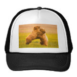 Grizzly Bears Wrestling Mesh Hat