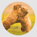 Grizzly Bears Wrestling Round Stickers