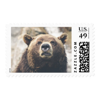 Grizzly brown bear postage stamp