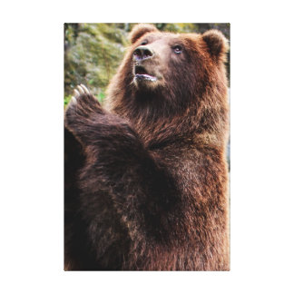 Grizzly Brown Bear Wildlife Photo Canvas Print