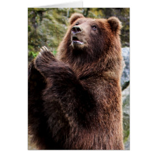 Grizzly Brown Bear Wildlife Photo Card