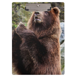 Grizzly Brown Bear Wildlife Photo Clipboards