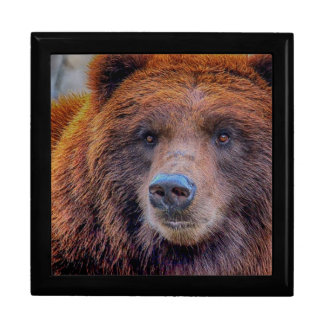 Grizzly Brown Bear Wildlife Photo Trinket Boxes