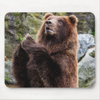 Grizzly Brown Bear Wildlife Photo Mouse Pad