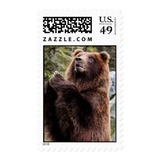 Grizzly Brown Bear Wildlife Photo Postage Stamp