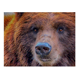 Grizzly Brown Bear Wildlife Photo Postcard